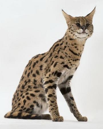首次发现雪豹金钱豹同域分布